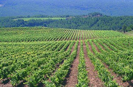 ANITEAF pone a disposición de la Unió de Pagesos 12 Estaciones ITEAF para hacer inspecciones en Cataluña – Interempresas Agricultura