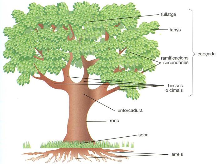 Resultado de imagen de parts arbre